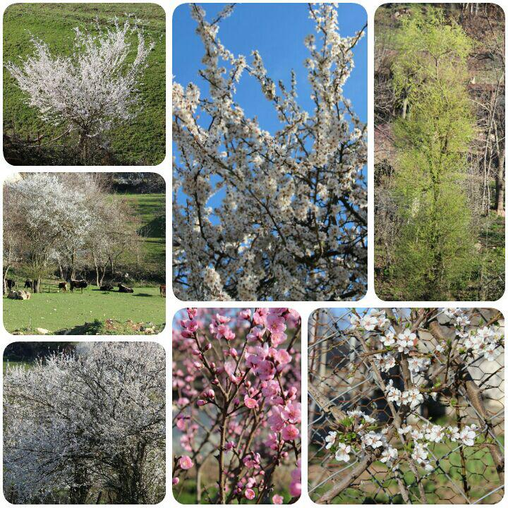 شکوفه های رنگی بهار 95